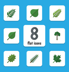 Flat icon natural set of spruce leaves acacia vector