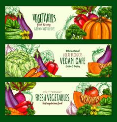 Vegetables harvest vegan cafe banners set vector
