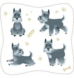 Set of schnauzer pupys vector image vector image