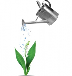 watering can and lily vector image