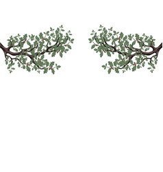 Two green branches of oak with acorns on both vector