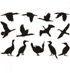 collection cormorant vector image