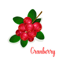 Cranberry fruit bunch with green leaf cartoon icon vector