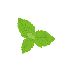fresh mint leaves on a white background vector image