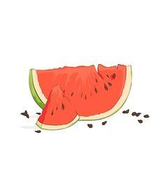 refreshing watermelon pieces vector image vector image
