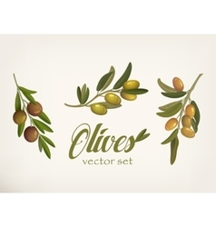 Set of green and yellow olive branches with leaves vector image