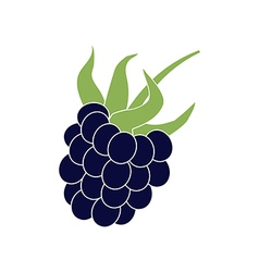 Blackberry berry icon vector