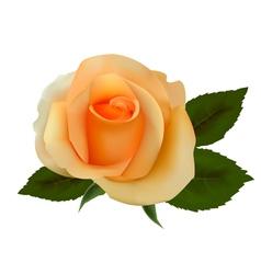 beautiful tea rose vector image vector image