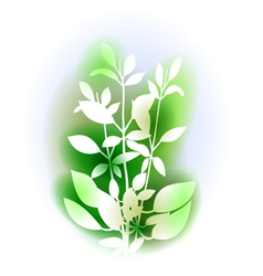 With basil bunch vector