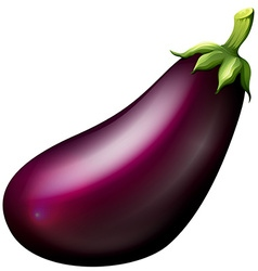 Purple eggplant on white vector