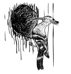 Drawing of woodpecker bird vector