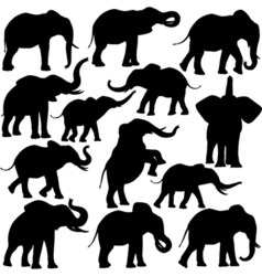 African elephants vector image