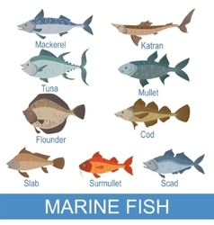 Marine fish identification slate with names vector