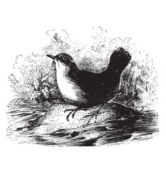 black dipper vintage vector image vector image