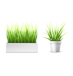 green grass in a rectangular and round pot vector image