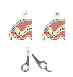 How to cut cat nail veterinary instruction vector