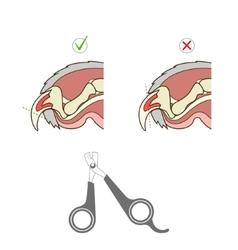How to cut cat nail veterinary instruction vector