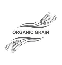 ears of wheat vector image