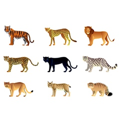 Big cats set vector