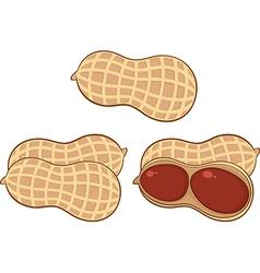 Cartoon peanuts vector