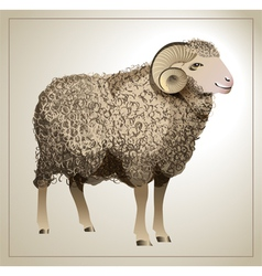 Realistic sheep vector