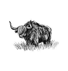 Hand sketch bull vector