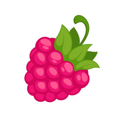 pink wild raspberry fruit with green stem isolated vector image