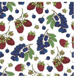 berries collection-06 vector image