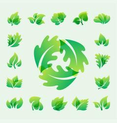 green leaf eco design friendly nature elegance vector image vector image