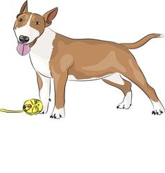 Bull terrier b vector