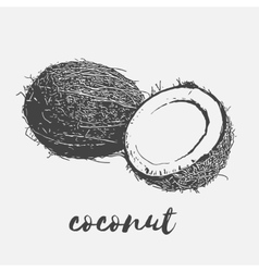 Ripe coconut vegan vector
