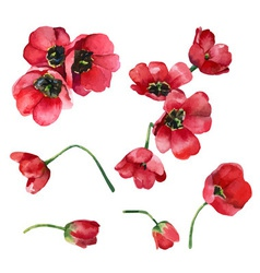 set of tulips vector image vector image