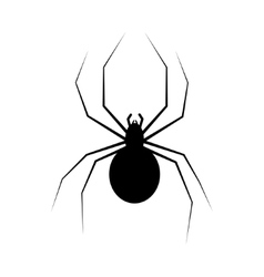 Spider isolated on white vector
