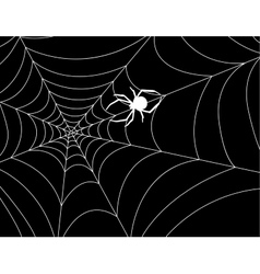 Cobweb with a spider in the center against night vector image