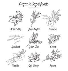 Organic Superfood Set vector image