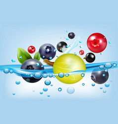 poster with berries and water vector image