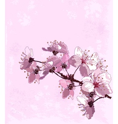 Spring cherry blossom vector