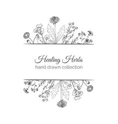 Holistic medicine healing herbs vector