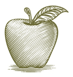 Woodcut ripe apple vector
