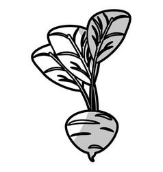Beetroot food nutrition - shadow vector