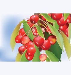 cherry branch with leaves vector image vector image