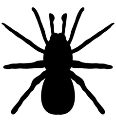 Black silhouette of a spider vector