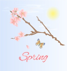 Spring twig of cherry and butterfly vector
