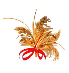 bunch of spikelets vector image vector image
