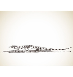 monitor lizard vector image