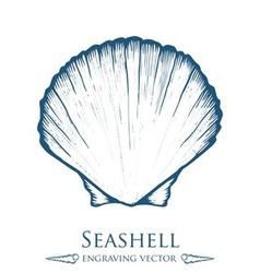 Seashell drawing vector