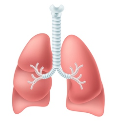 Human lung vector