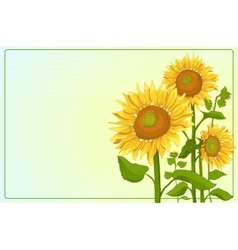 Background with sunflowers vector