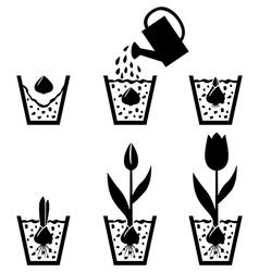 pot tulips vector image