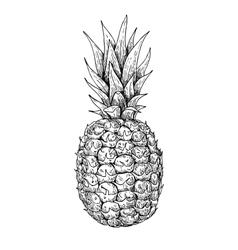 Hand drawn pineapple summer fruit engraved vector